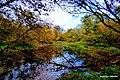 Rzeka Wisła widoki z okolic przy brzegu rzeki idąc w kierunku Fordonu. - panoramio (13).jpg