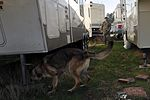 SFS military working dogs train 120227-F-YU668-039.jpg