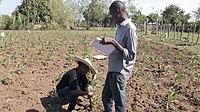 SOIL agricultural interns begin a sorghum experiment. (15974496253).jpg