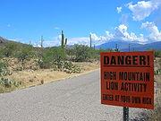Panneau avertissant de la présence de puma dans le Parc national de Saguaro (États-Unis)