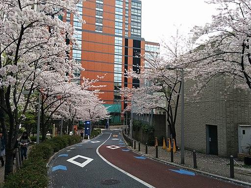 Sakurazaka te Roppongi 6-chōme met kersenbloesem, naar beneden gezien, -6 april 2016 a