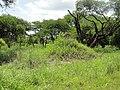 Salima, Malawi - panoramio (16).jpg