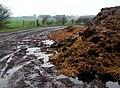 Salthaugh Sands - geograph.org.uk - 297428.jpg