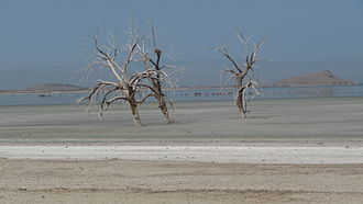 Quantification Settlement Agreement - Drowned trees in the dry bed of the Salton Sea