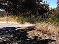 San Francisco Bay Trail in Shoreline Park Mountain View.jpg