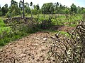 School farm, Siany Mixed Secondary School (6908860893).jpg