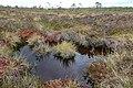 Schwarzes Moor in der Rhön.jpg