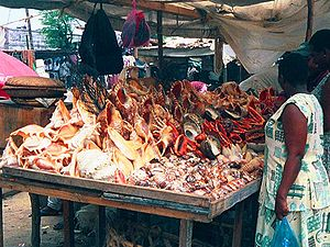 Conchology - A vendor in Tanzania with a variety of large seashells for sale