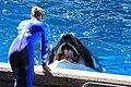 Seaworld-SanAntonio-Shamu-2464.jpg