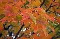 Seney Fall (15460953632).jpg
