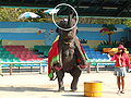 SeoulChildrensGrandPark-zoo-elephant.jpg