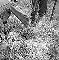 Serie Landmijnen ruimen in Hoek van Holland, Bestanddeelnr 900-6467.jpg