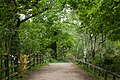 Sherwood Forest, May, 2017-6.jpg