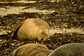 Shoalwater marine park-1004.jpg