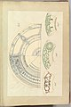 Six Designs for Decorated Plates MET DP827476.jpg