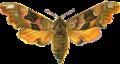 Smerinthus Tiliae.png