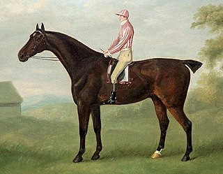 Smolensko (horse) British Thoroughbred racehorse