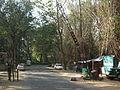 Snap during safari in Wayanad Wildlife Sanctuary 9873.JPG