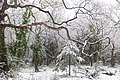 Snow in Epping Forest - Dec 2017 - 03.jpg
