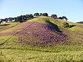 Solano-hillside 001.jpg