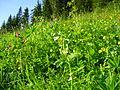 Sommerwiese auf Matschwitz.jpg