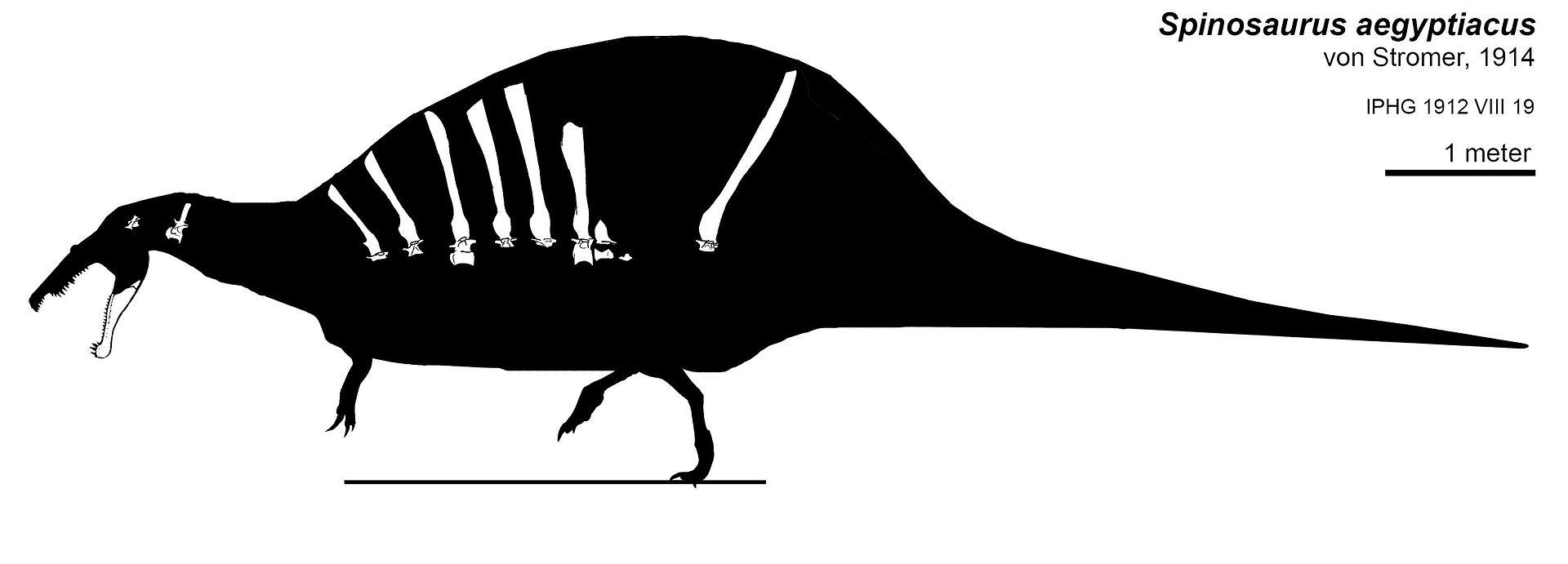 Spinosaurus, holotipo