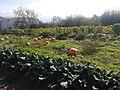 Squash Plantations in Lasithi Plateau.jpg