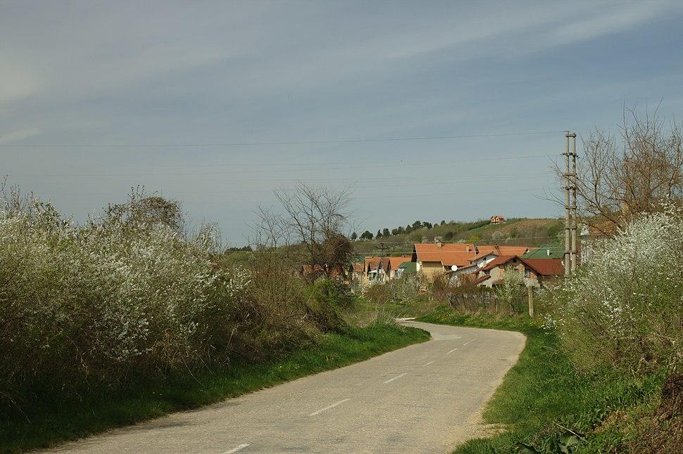 Sremski Karlovci, Stražilovski put