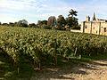 St Emilion vineyard.jpg