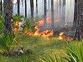 St Vincent NWR Prescribed Fire 10-30-2007 (5327600303).jpg