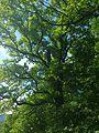 Stamser Eichenwald 07.jpg