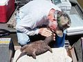 Stan Trauth gives mouth to nose to an Alligator Snapper.jpg