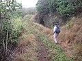 Starr-130311-2044-Andropogon virginicus-habit with Kim view Kauhikoa Tunnel and Ditch-Maliko Gulch-Maui (25113372321).jpg