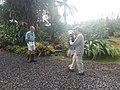 Starr-140925-1922-Philodendron sp-habit with Frank Angela Kim and Pukiki cat-Pali o Waipio Huelo-Maui (24878769849).jpg
