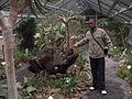 Stellenbosch University Botanical Garden - succulent greenhouse.jpg