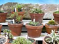 Subalpine Plant Collections and Percy Scenic Reserve.jpg