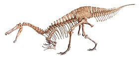 Suchomimus white background.jpg