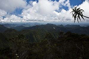 Marojejy National Park - Sclerophyllous montane cloudforest, as seen from the summit, has shorter trees than the forests in the lowland areas.