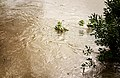 Swirls at high water in Broälven.jpg