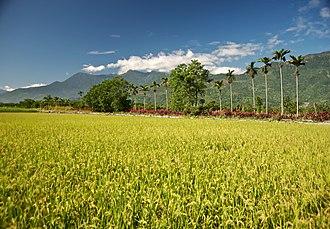 Hai'an Range - Image: Taiwan 2009 Hua Lien Rice Paddy at Foot of Mountain FRD 6130 Book Back Cover