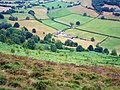 Tan-y-Graig in Pengwern Vale - from above - geograph.org.uk - 210989.jpg