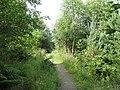 Tantah Trail, Cademuir Plantation - geograph.org.uk - 1206410.jpg