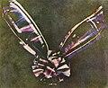 Tartan Ribbon.jpg