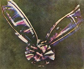 A bow made of tartan ribbon. The center of the bow is round, made of piled loops of ribbon, with two pieces of ribbon attached underneath, one extending at an angle to the upper left corner of the photograph and another extending to the upper right. The tartan colors are faded, in shades mostly of blue, pink, maroon, and white; the bow is set against a background of mottled olive.