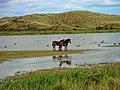Texel - Pompevlak - View NE on Wild Horses III.jpg