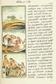 The Florentine Codex- Insects and Inflammations.tif