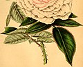 The Florist and horticultural journal (1853) (14779119744).jpg