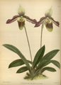 The Orchid Album-03-0042-0109.png