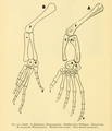 The Osteology of the Reptiles-204 jhg drt.png