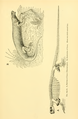 The Osteology of the Reptiles-253 derf.png